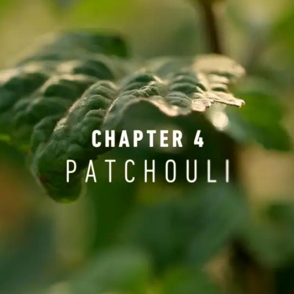 NaturalsTogether™ Chapter 4: Patchouli