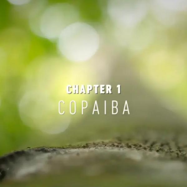NaturalsTogether™ Chapter 1: Copaiba